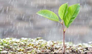 La vida de la lluvia.
